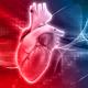 ساختار قلب انسان تپش قلب